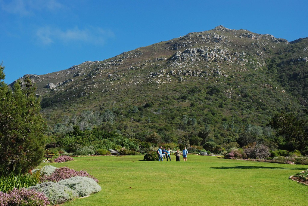 Enjoying the view from Kirstenbosch Gardens  Kathy and Jim are avid gardeners, so a visit to Kirstenbosch National Botanical Gardens was a logical stop on their Cape Town tour.