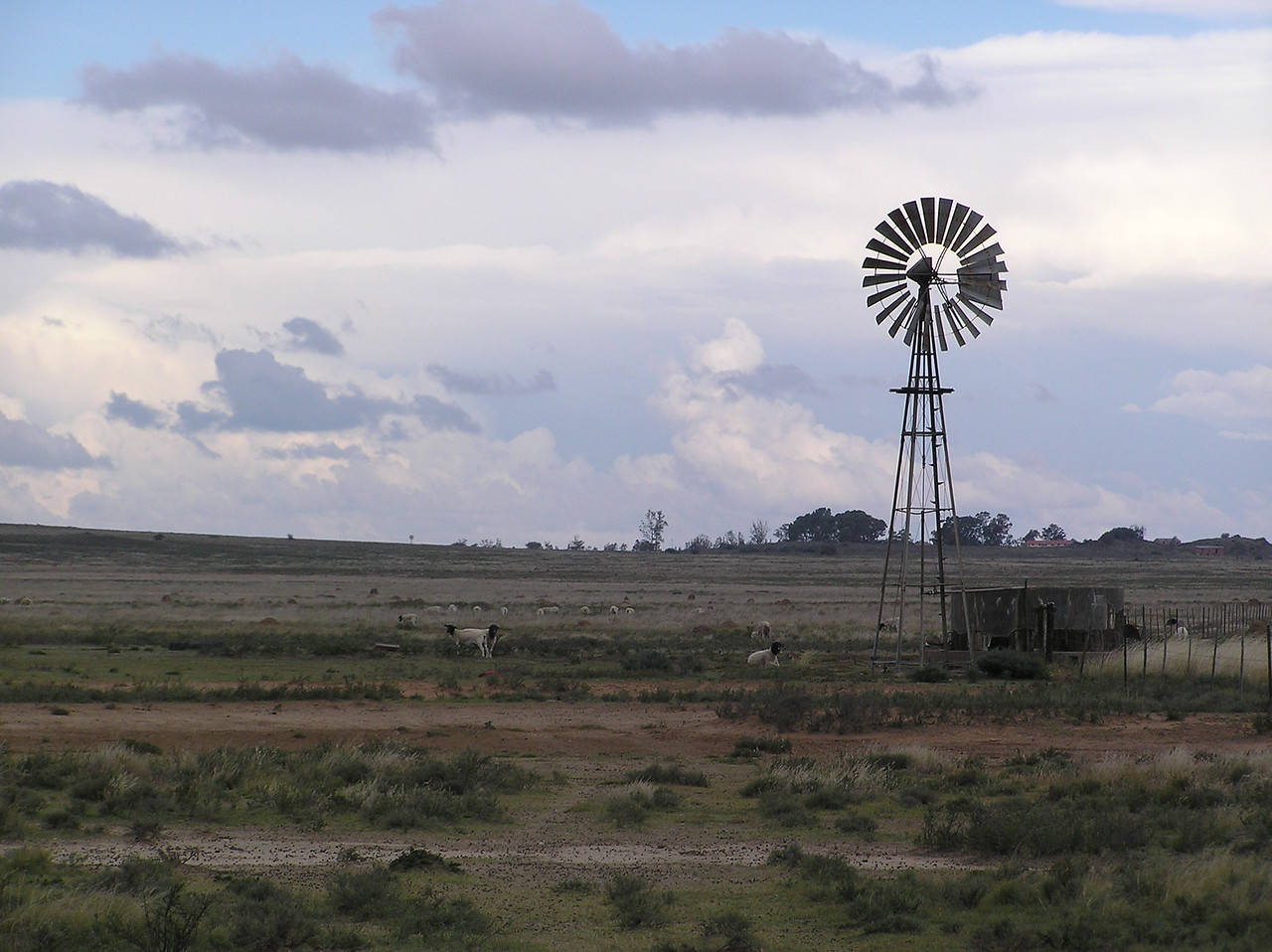 Sheep farm in the Karoo<br /> <br /> Beyond the Hex River Valley, the mountains began to flatten out, the terrain became noticeably drier and rockier, and vegetation grew scarcer. Citrus groves gave way to sheep farms and the occasional cattle farm.