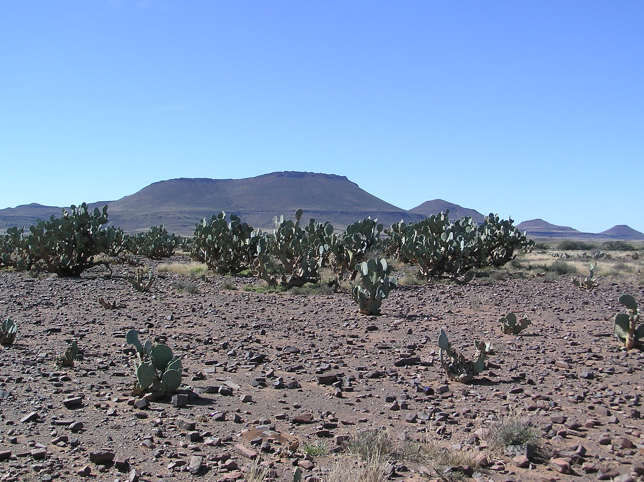 Cactus along the highway in the Karoo<br /> <br /> We saw our first cactus growing along the highway