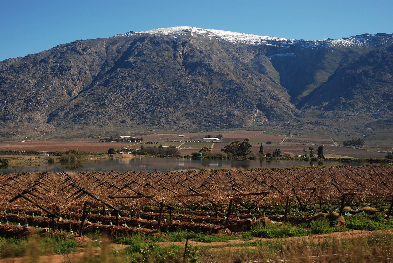 Snow on the mountains in the Hex River Valley and many vines<br /> <br /> As we continued northeast through the Hex River Valley, our bright blue skies and sunshine returned. This valley is the largest producer of table grapes in South Africa, apparent by the rows of vines that extended for as far as we could see. The annual harvest starts at the end of December and, from then until February, signs along the highway warn motorists that they may be fined R750.00 (~CDN$100) for stopping. This is to prevent people from buying stolen grapes that are sold along the busy highway by young children.  We have witnessed children selling cases of grapes along this highway, and it is terrifying to watch overloaded trucks roaring past them as they ply their wares from the narrow strip of gravel along the highway. <br /> <br /> We felt right at home in the Hex River Valley when we discovered snow on the highest mountain peaks, including Matroosberg which, at 2249m, is the highest mountain peak in the province of the Western Cape.