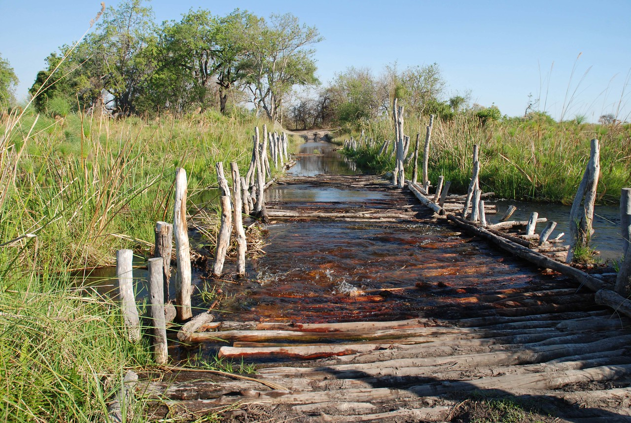"""Third Bridge in the Moremi Game Reserve, Botswana<br /> <br /> Crossing the bridges in the Moremi Game Reserve always added a little excitement to our day. The word """"bridge"""" is perhaps a wee bit of an overstatement. The bridges are simple structures made of wooden poles strung loosely together in a somewhat haphazard fashion. They have alarming gaps and holes that, at times, threatened to swallow up our vehicle. The bridges rattled and shook alarmingly as we made our way gingerly across. Due to high water levels in the Okavango Delta, large sections of each bridge were underwater, making it impossible to see/avoid the hazardous sections that would occasionally cause the Land Rover to lurch alarmingly. Great fun!"""