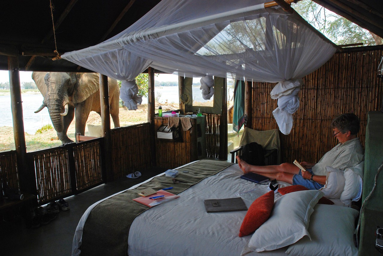 """Our tent at Old Mondoro - so memorable!<br /> <br /> Our tent - one of only four - at Old Mondoro Bush Camp in Lower Zambezi National Park. Just 15 metres from the Zambezi, it had a wonderful view of the river and the hippos and elephants that liked to cross to the islands. The front of the canvas and reed tent was open during the day, allowing us to appreciate the view, but canvas flaps allowed it to be closed up securely at night. The tent had a very comfortable king-sized, mosquito-draped bed, which was strategically placed so that we would not miss any of the action on the river during our midday siesta. There was a shaded deck with a very comfortable day bed, which also proved an excellent vantage point from which to view the river and the white-fronted bee-eaters that like to perch on a branch over the water. The tent had an en-suite wash basin and flush loo. Adjoining the tent and accessed through a side door, was an outdoor shower and a wonderful, large stone tub - a great place, we soon discovered, to cool off during the heat of the day. The tent had 24-hour hot and cold water and electricity, and thoughtful touches such as a kikoi to dampen and snooze under during the heat of the day, and a clothesline with pegs for drying """"smalls"""". No creature comforts missing in these tents!"""