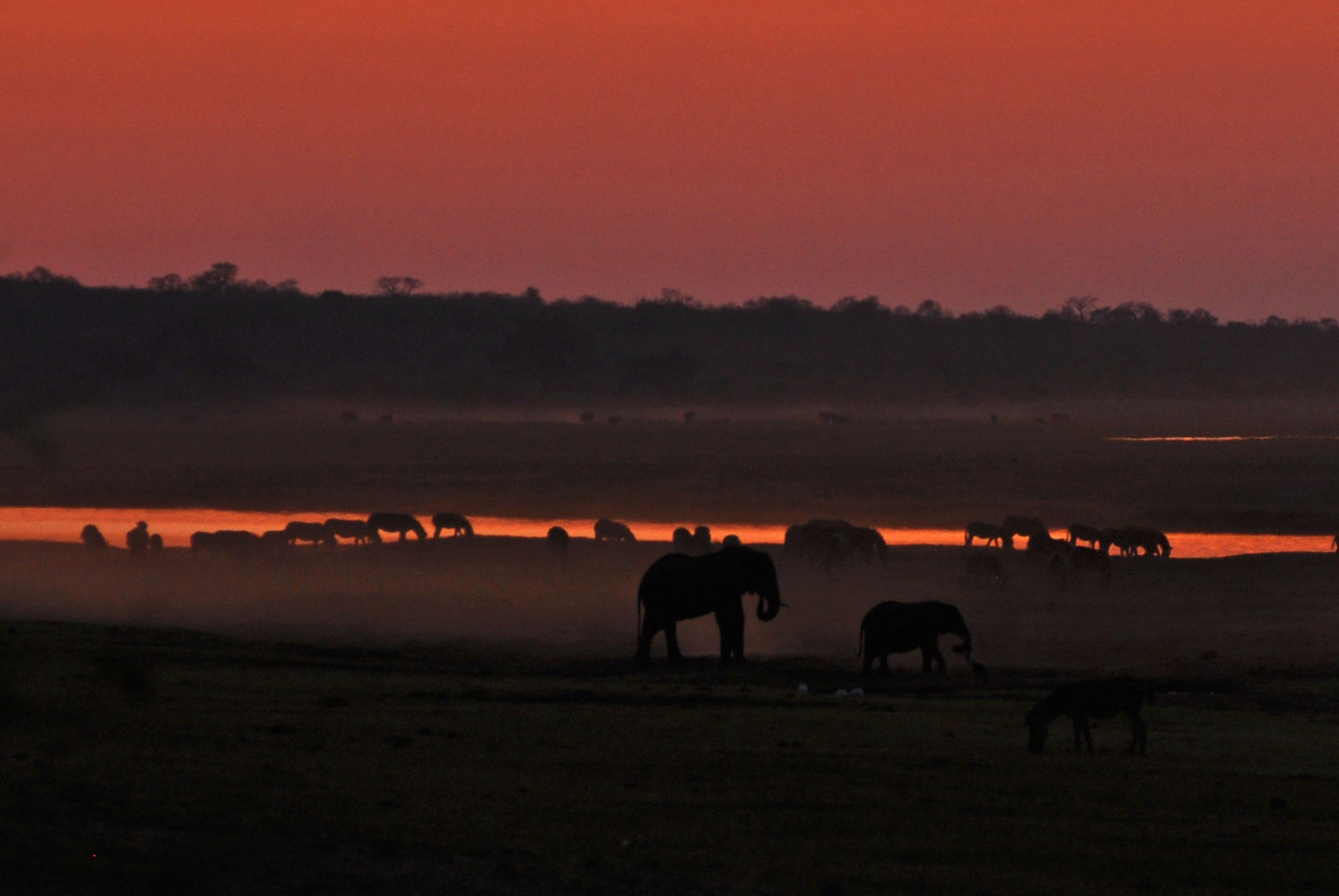 Sunset over the Chobe River<br /> <br /> The African sunsets - always such stunning colours!